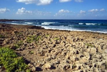 """фото пляж, Отель """"Avlida"""" 4*, Пафос"""