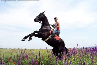 """фото конные прогулки, Гостиница """"Легенда"""", Алушта"""