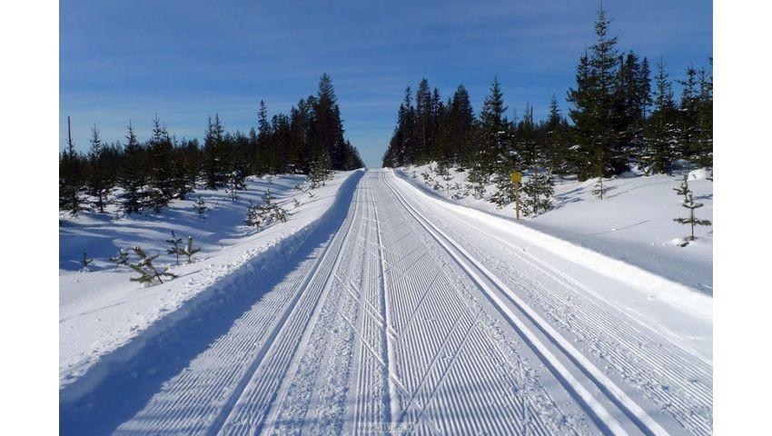 подготовленная лыжня